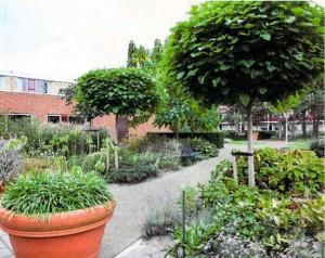 Tuin Nieuwpoort Alkmaar - 1